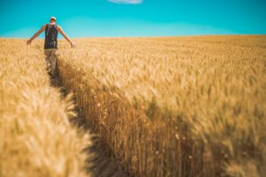 Czy rolnik może ogłosić upadłość konsumencką